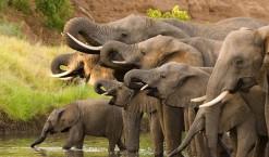Explorer les merveilles de la Namibie avec safarivo.com