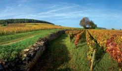 Le vin en ligne, après tout pourquoi pas : vente-de-vin.com