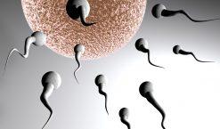 Comment calculer sa période d'ovulation ?