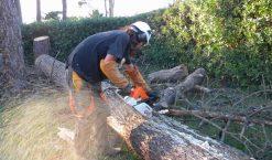 Comment couper un arbre ?